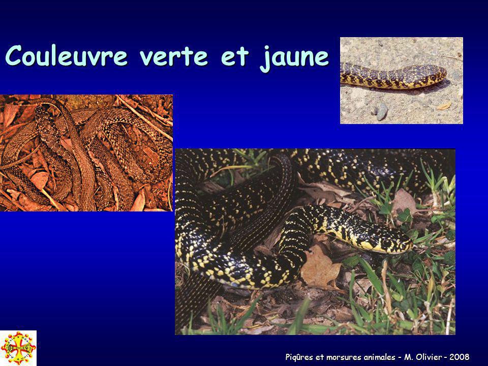 Piqûres et morsures animales - M. Olivier - 2008 Couleuvre verte et jaune