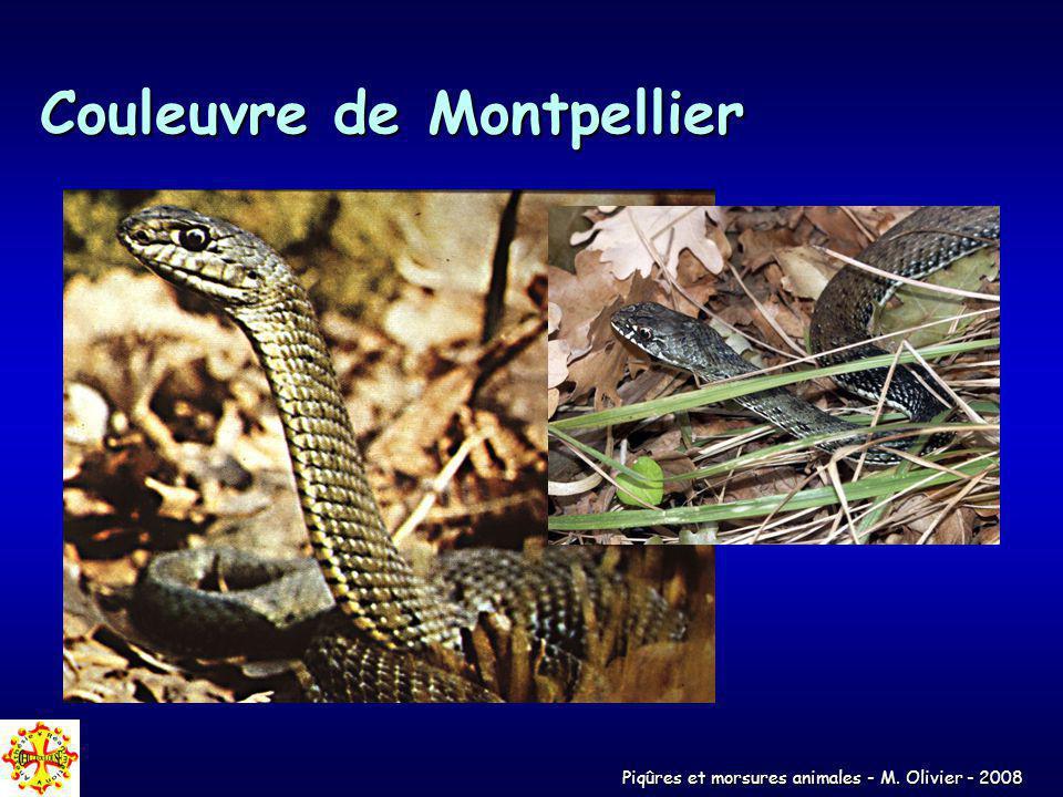 Piqûres et morsures animales - M. Olivier - 2008 Couleuvre de Montpellier