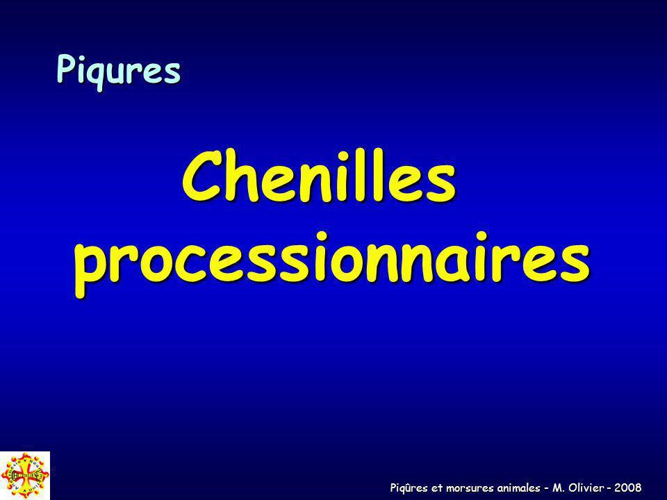 Piqûres et morsures animales - M. Olivier - 2008 Piqures Chenilles processionnaires