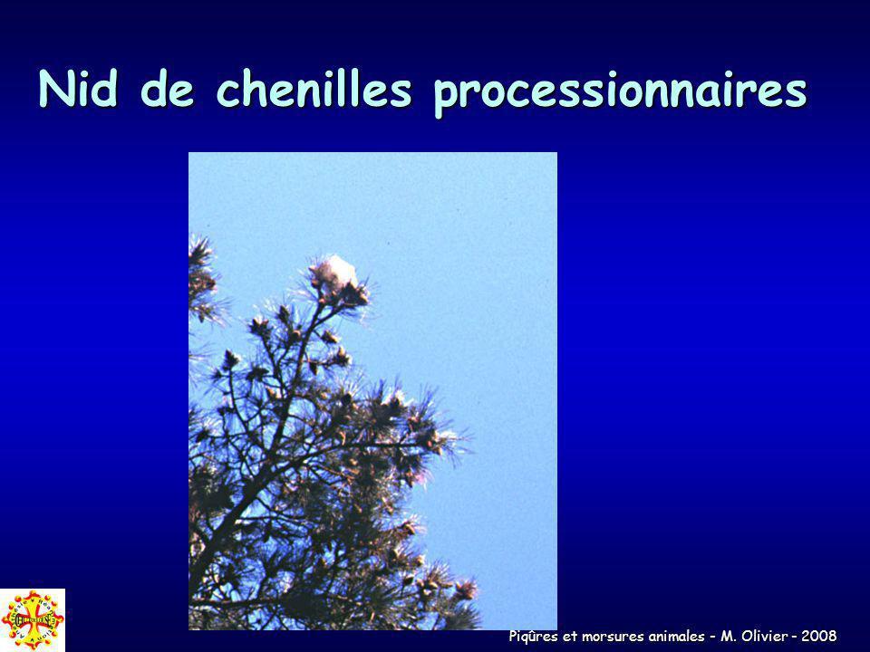 Piqûres et morsures animales - M. Olivier - 2008 Nid de chenilles processionnaires