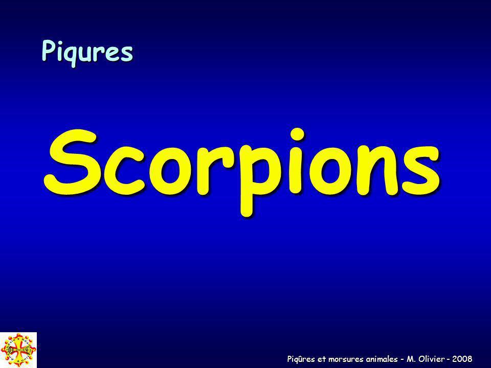 Piqûres et morsures animales - M. Olivier - 2008 Piqures Scorpions