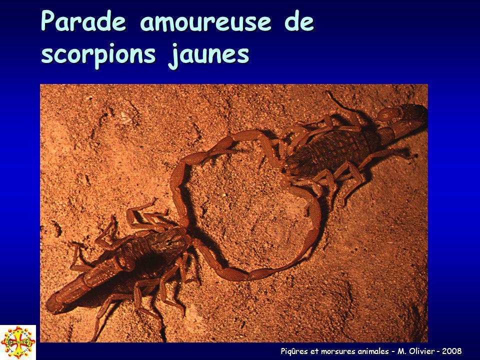 Piqûres et morsures animales - M. Olivier - 2008 Parade amoureuse de scorpions jaunes