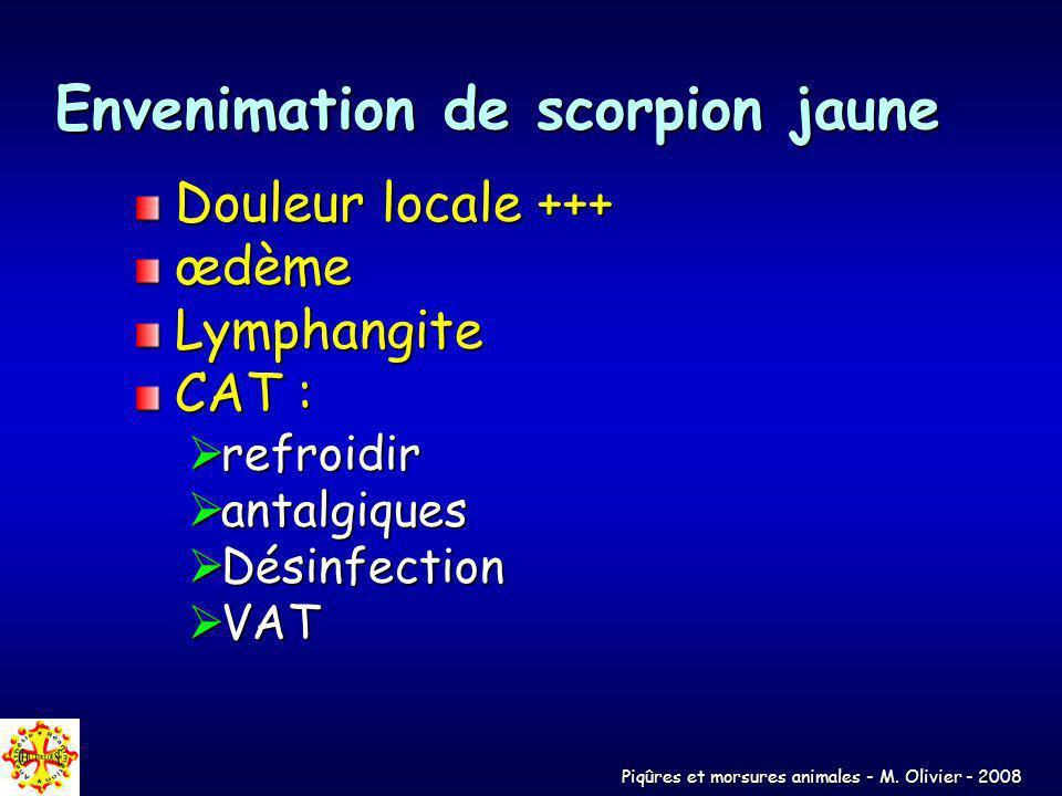 Piqûres et morsures animales - M. Olivier - 2008 Envenimation de scorpion jaune Douleur locale +++ œdèmeLymphangite CAT : refroidir refroidir antalgiq