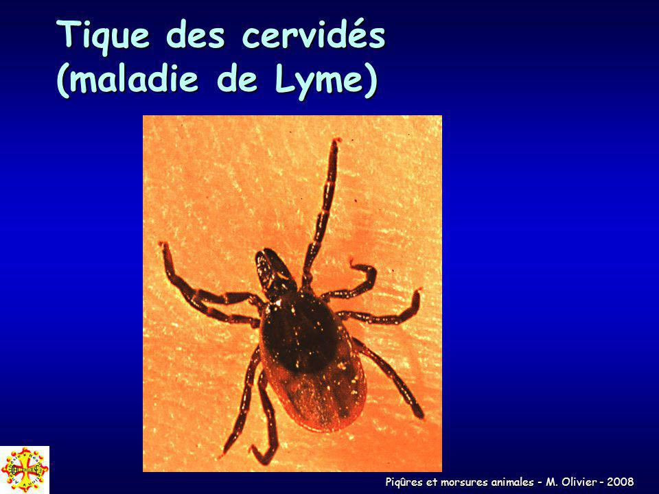 Piqûres et morsures animales - M. Olivier - 2008 Tique des cervidés (maladie de Lyme)