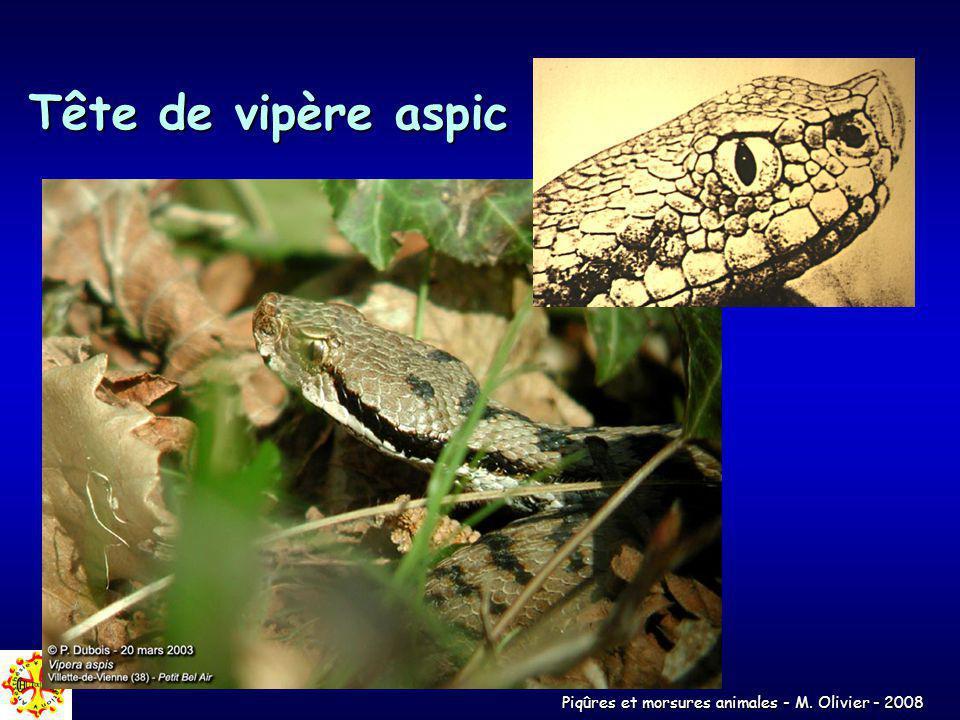 Piqûres et morsures animales - M. Olivier - 2008 Tête de vipère aspic