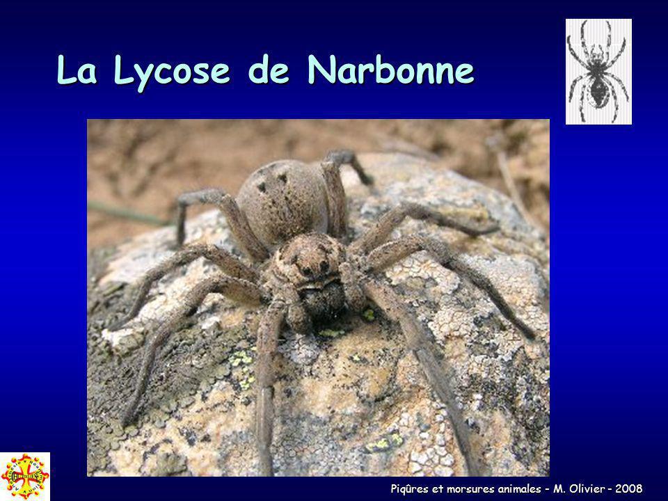 Piqûres et morsures animales - M. Olivier - 2008 La Lycose de Narbonne
