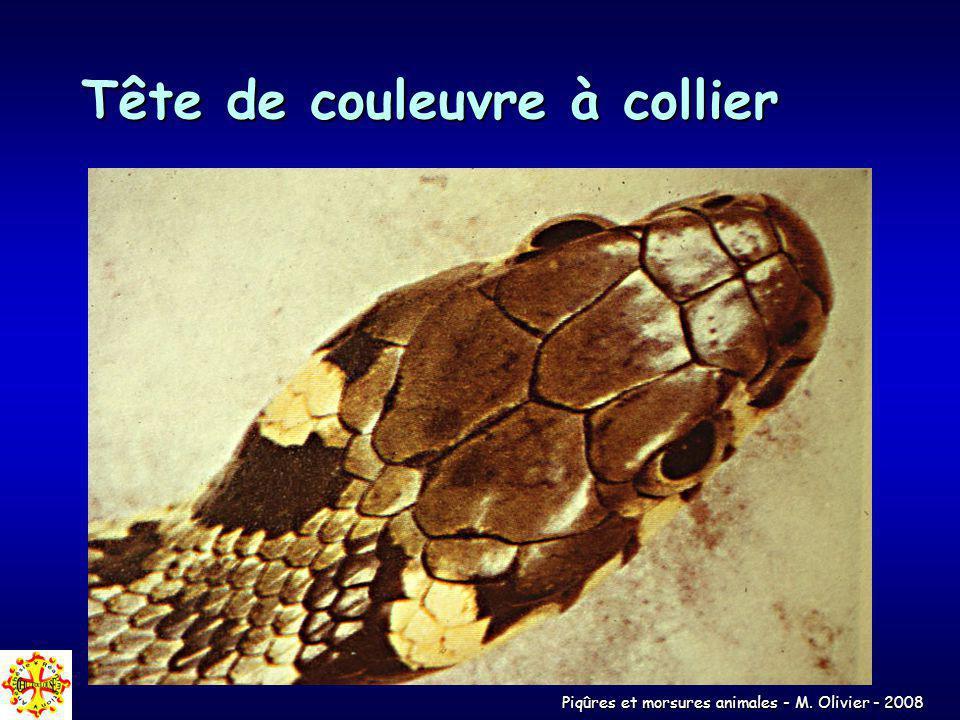 Piqûres et morsures animales - M. Olivier - 2008 Tête de couleuvre à collier