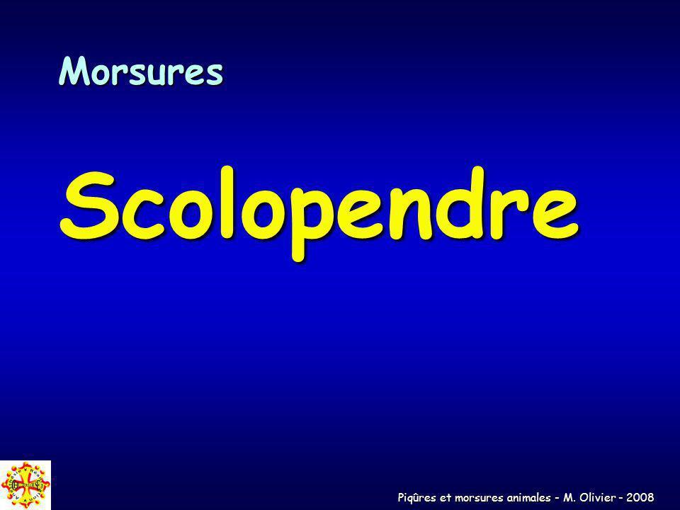 Piqûres et morsures animales - M. Olivier - 2008 Morsures Scolopendre