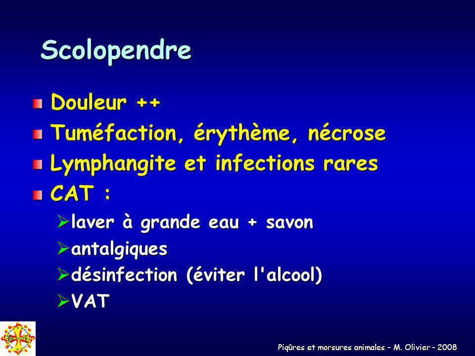 Piqûres et morsures animales - M. Olivier - 2008 Scolopendre Douleur ++ Tuméfaction, érythème, nécrose Lymphangite et infections rares CAT : laver à g