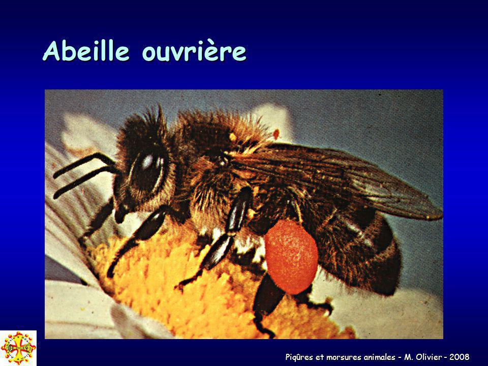 Piqûres et morsures animales - M. Olivier - 2008 Abeille ouvrière
