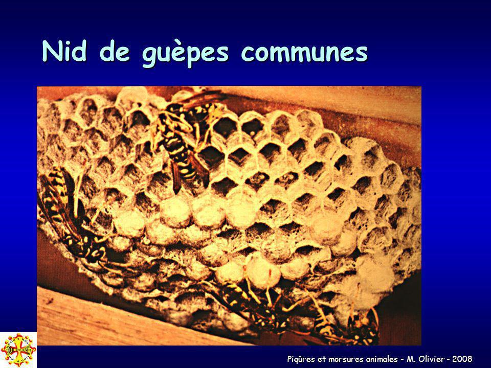 Piqûres et morsures animales - M. Olivier - 2008 Nid de guèpes communes