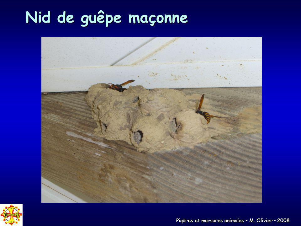 Piqûres et morsures animales - M. Olivier - 2008 Nid de guêpe maçonne