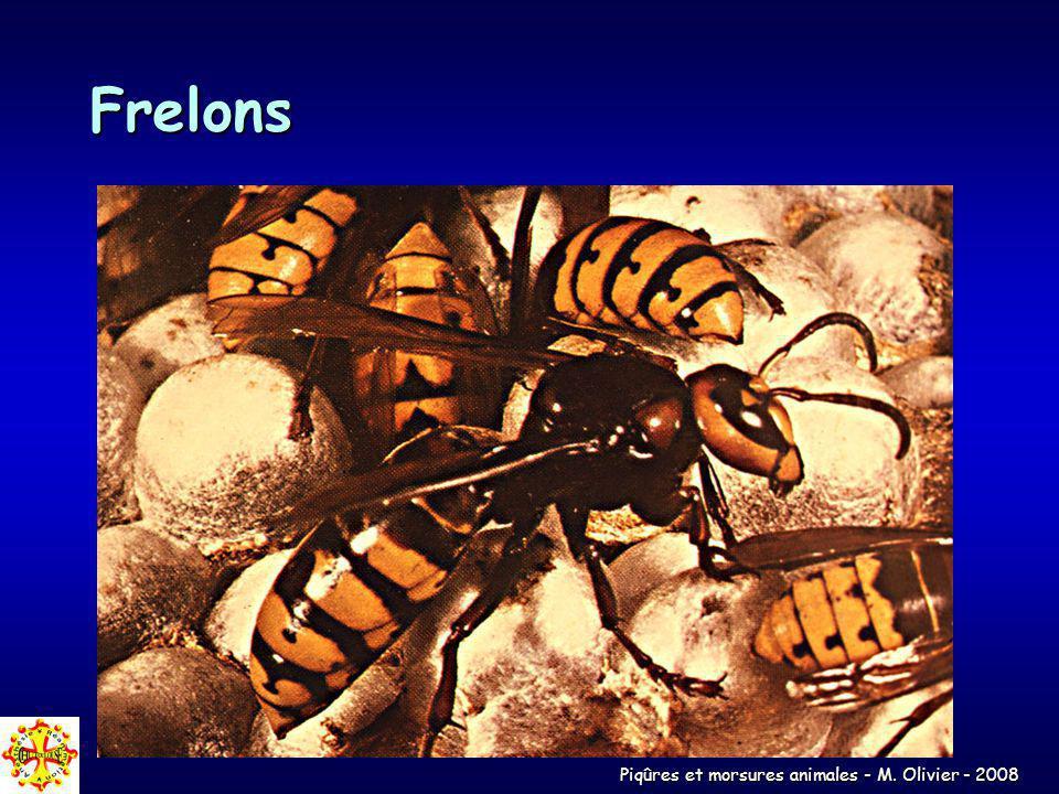 Piqûres et morsures animales - M. Olivier - 2008 Frelons