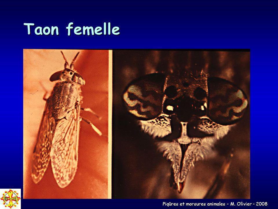 Piqûres et morsures animales - M. Olivier - 2008 Taon femelle