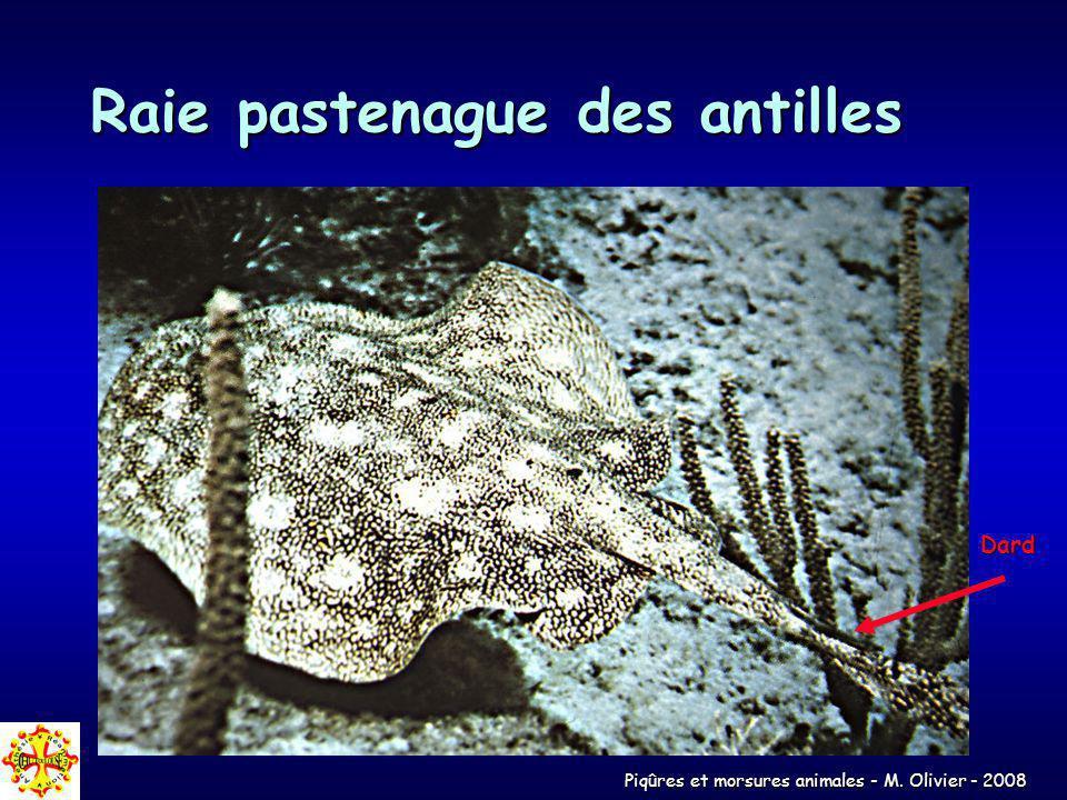 Piqûres et morsures animales - M. Olivier - 2008 Raie pastenague des antilles Dard