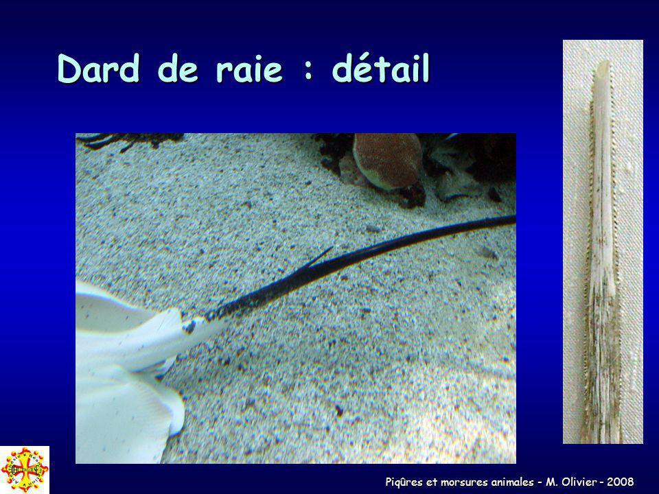 Piqûres et morsures animales - M. Olivier - 2008 Dard de raie : détail