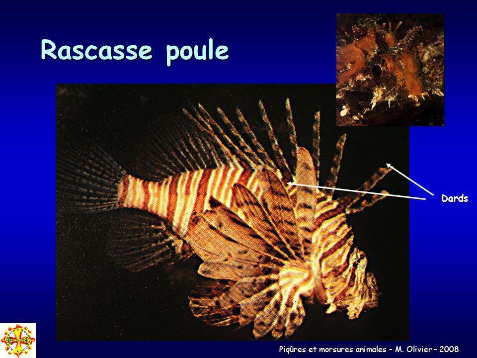 Piqûres et morsures animales - M. Olivier - 2008 Rascasse poule Dards