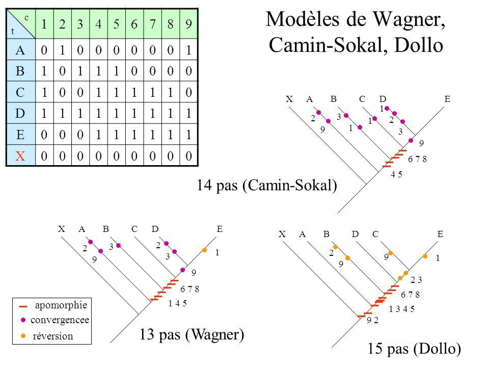 Modèles de Wagner, Camin-Sokal, Dollo c t 123456789 A010000001 B101110000 C100111110 D111111111 E000111111 X000000000 EABCDX 1 4 5 6 7 8 3 2 3 2 9 9 1 ABCDEX 4 5 6 7 8 3 1 2 3 2 9 9 1 EABDCX 1 3 4 5 6 7 8 9 2 2 9 1 2 3 9 13 pas (Wagner) 14 pas (Camin-Sokal) 15 pas (Dollo) apomorphie convergencee réversion