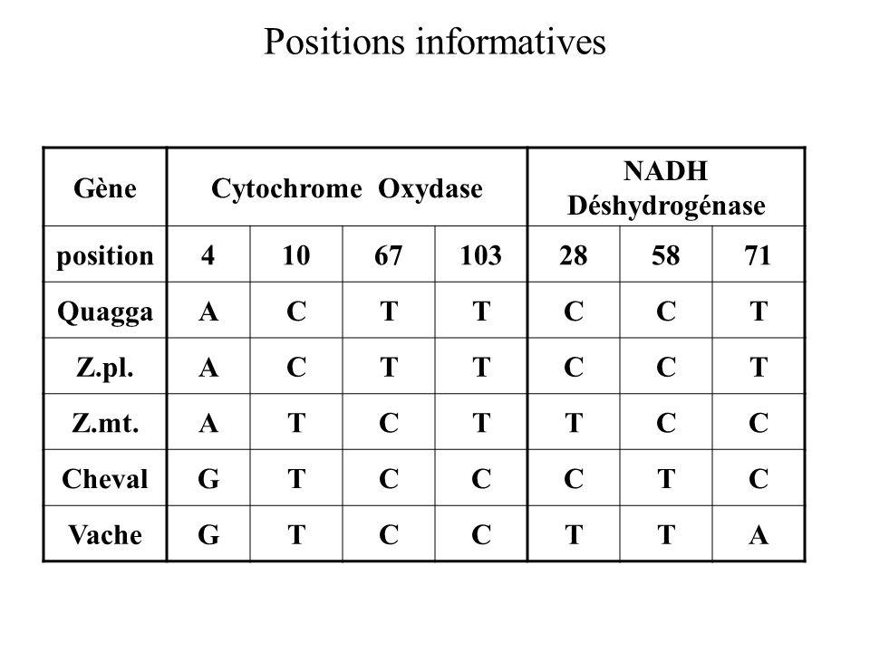 Positions informatives GèneCytochrome Oxydase NADH Déshydrogénase position41067103285871 QuaggaACTTCCT Z.pl.ACTTCCT Z.mt.ATCTTCC ChevalGTCCCTC VacheGTCCTTA