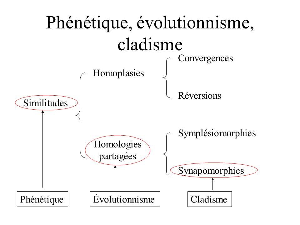 Phénétique, évolutionnisme, cladisme Similitudes Homoplasies Homologies partagées Convergences Réversions Symplésiomorphies Synapomorphies PhénétiqueÉvolutionnismeCladisme