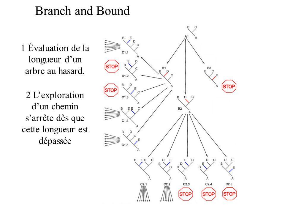 Branch and Bound 1 Évaluation de la longueur dun arbre au hasard.