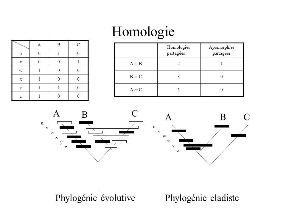 Homologie ABC u010 v001 w100 x100 y110 z100 0 0 1 Apomorphies partagées 1 3 2 Homologies partagées A et C B et C A et B AC B u v w x y z ACB u v w x y z Phylogénie cladistePhylogénie évolutive
