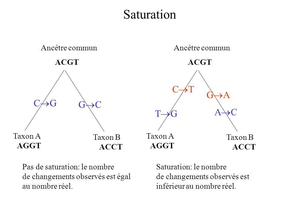 Saturation Taxon A AGGT Taxon B ACCT Ancêtre commun ACGT C G G C Taxon A AGGT Taxon B ACCT Ancêtre commun ACGT C T G A A C T G Pas de saturation: le n