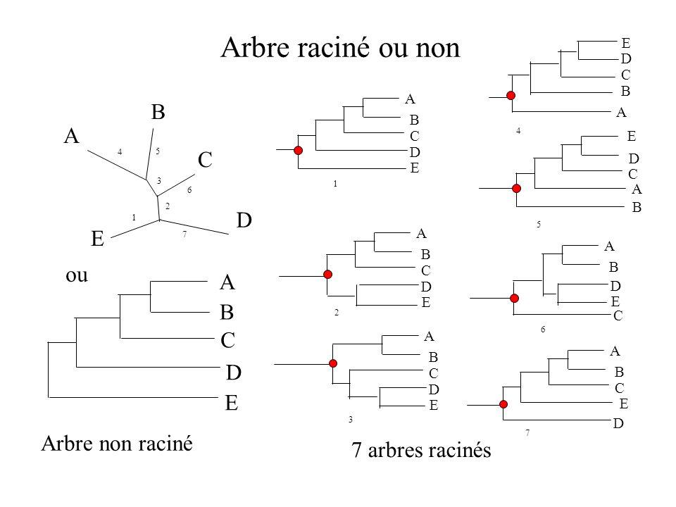 Arbre raciné ou non E A B C D E Arbre non raciné 7 arbres racinés ou A B C D E 1 A B C D E 7 A B C D E 4 A B C D E 2 A B C D E 6 A B C D E 5 A B C D E 3 A B C D 1 7 6 5 3 2 4