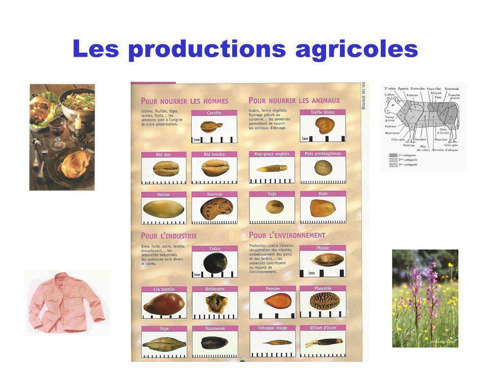 La production des grandes cultures en France 37 Mt de blé tendre 33 Mt de betteraves 16 Mt de maïs grain 10 Mt dorge 5 Mt doléagineux 5 Mt de pommes de terre 2 Mt de protéagineux