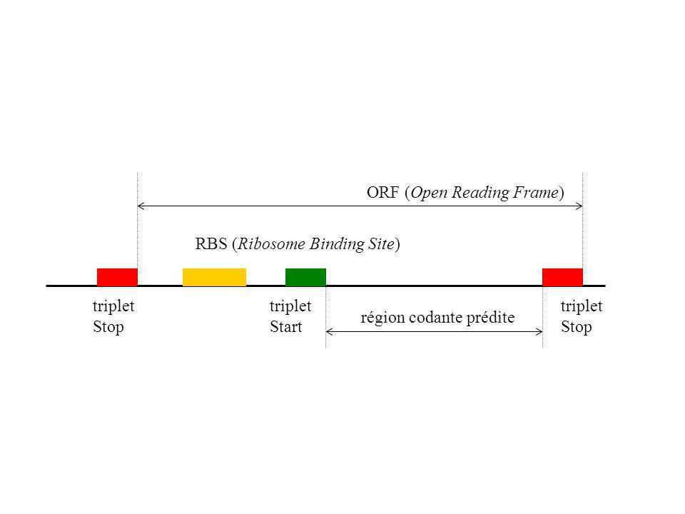 ORF (Open Reading Frame) RBS (Ribosome Binding Site) région codante prédite triplet Stop triplet Start triplet Stop
