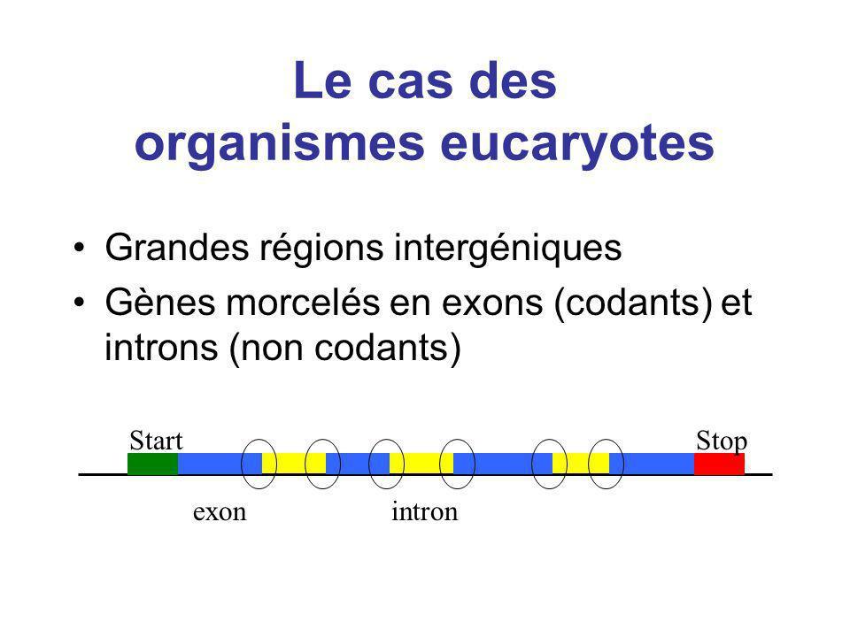 Le cas des organismes eucaryotes Grandes régions intergéniques Gènes morcelés en exons (codants) et introns (non codants) StartStop exonintron