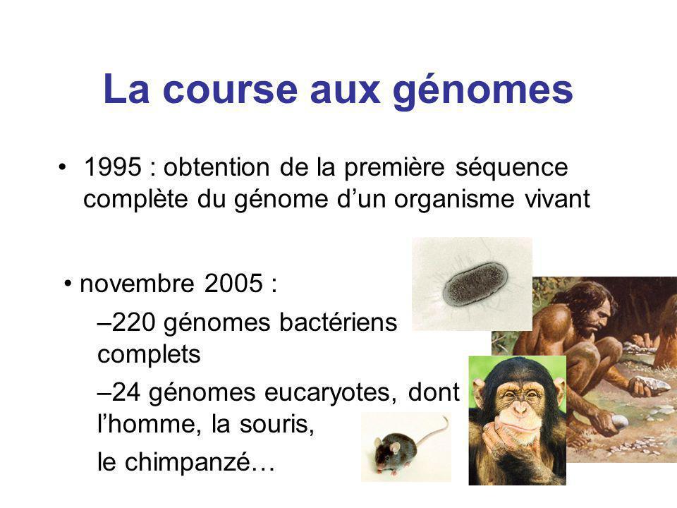novembre 2005 : –220 génomes bactériens complets –24 génomes eucaryotes, dont lhomme, la souris, le chimpanzé… La course aux génomes 1995 : obtention