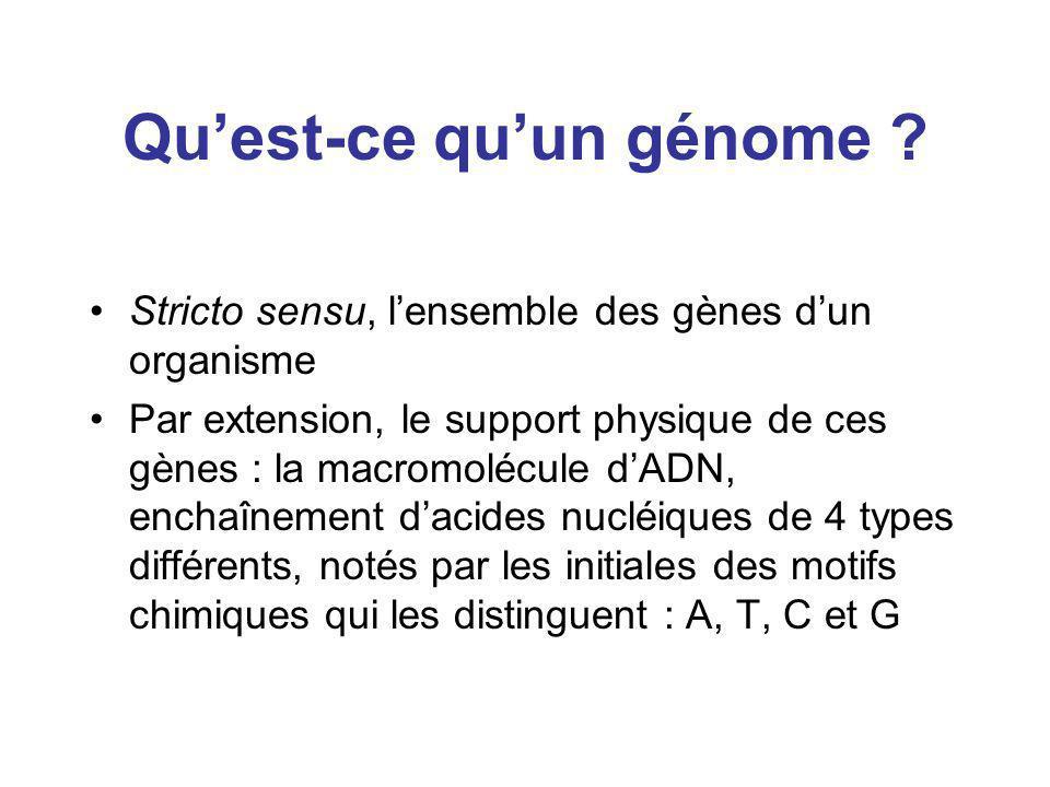Quest-ce quun génome ? Stricto sensu, lensemble des gènes dun organisme Par extension, le support physique de ces gènes : la macromolécule dADN, encha