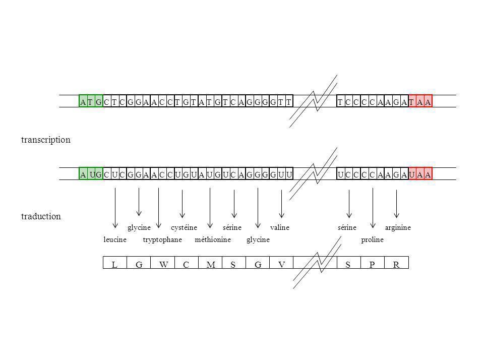 Malheureusement… On trouve des triplets Stop en dehors des gènes On trouve des triplets Start au sein des gènes : ils codent alors pour un acide aminé, la méthionine Une première stratégie de recherche de gènes