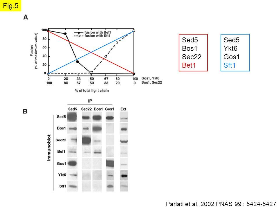 Parlati et al. 2002 PNAS 99 : 5424-5427 Fig.5 Sed5 Ykt6 Gos1 Sft1 Sed5 Bos1 Sec22 Bet1