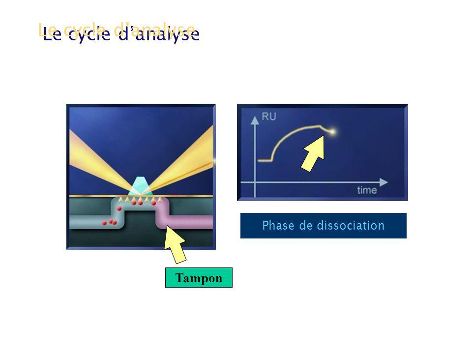 Phase de dissociation Le cycle danalyse Tampon