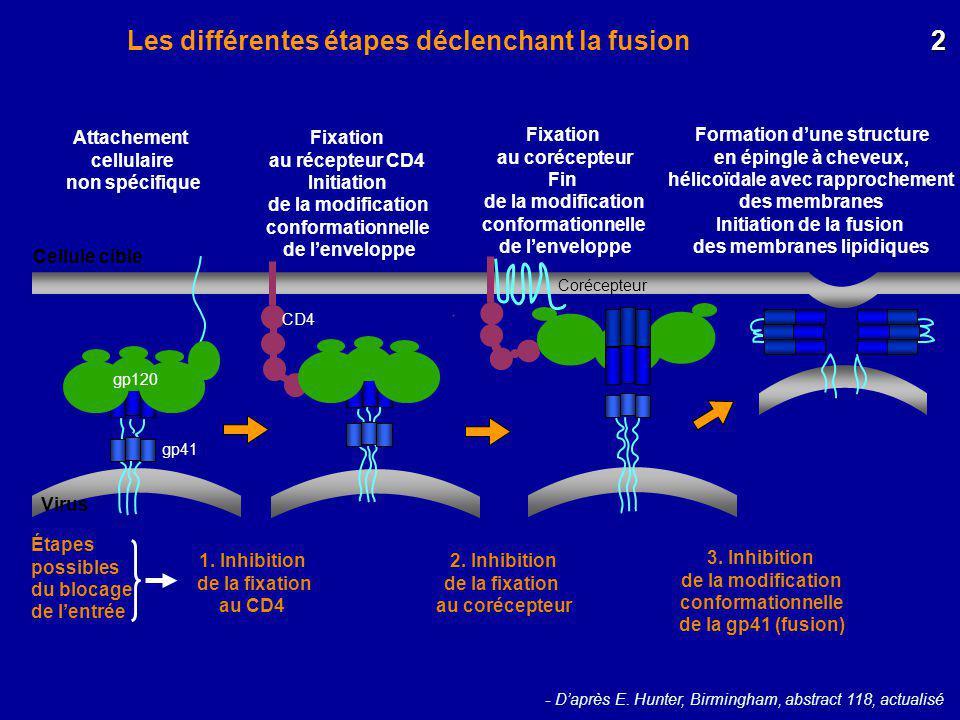 Les différentes étapes déclenchant la fusion - Daprès E. Hunter, Birmingham, abstract 118, actualisé Attachement cellulaire non spécifique Fixation au