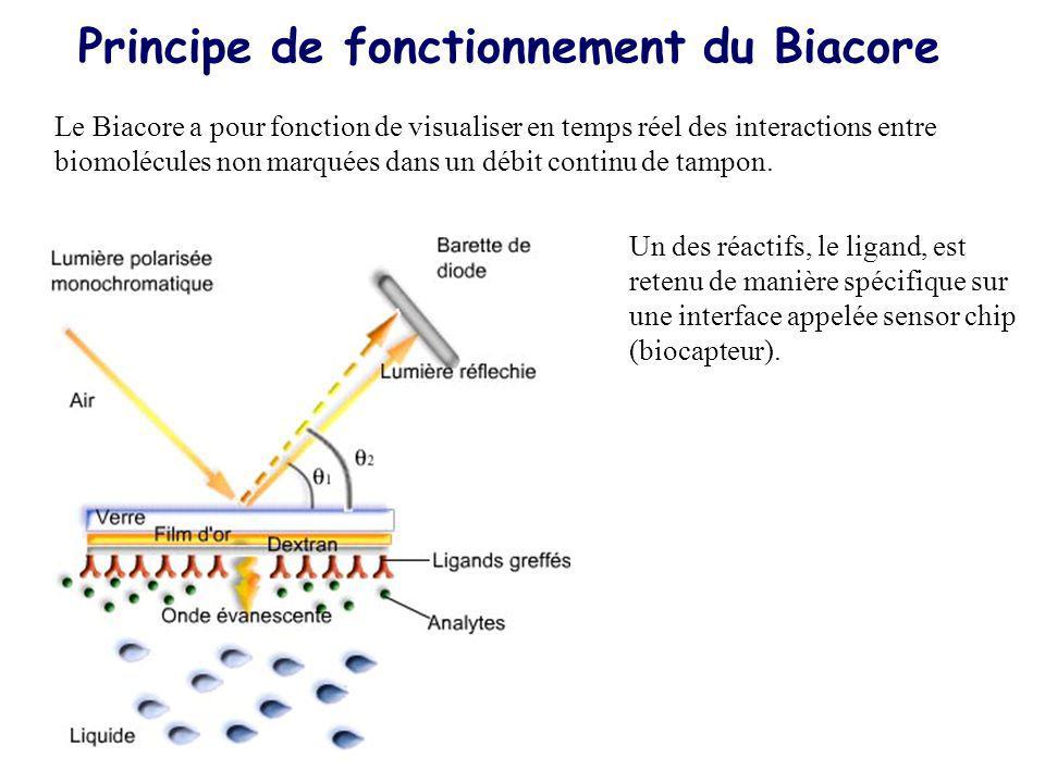 Le Biacore a pour fonction de visualiser en temps réel des interactions entre biomolécules non marquées dans un débit continu de tampon. Principe de f