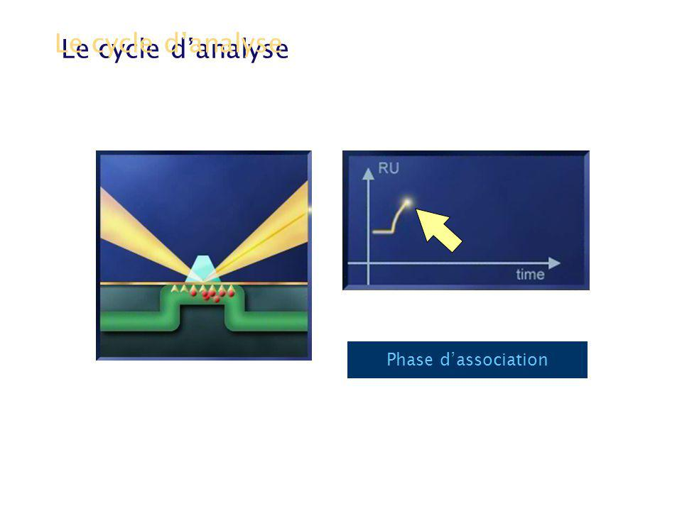 Le cycle danalyse Phase dassociation