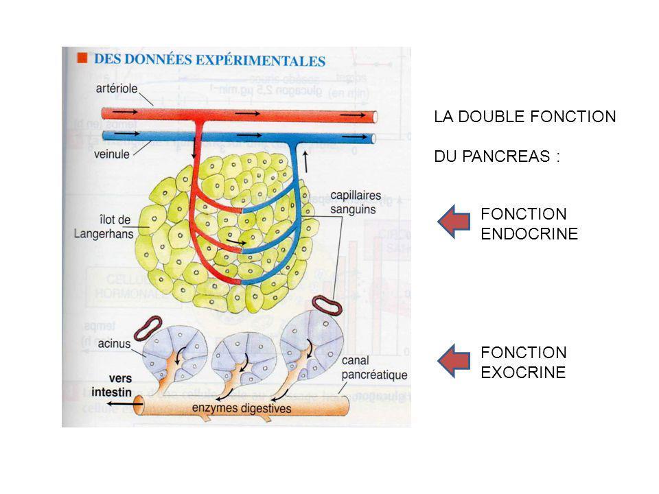 FONCTION ENDOCRINE FONCTION EXOCRINE LA DOUBLE FONCTION DU PANCREAS :