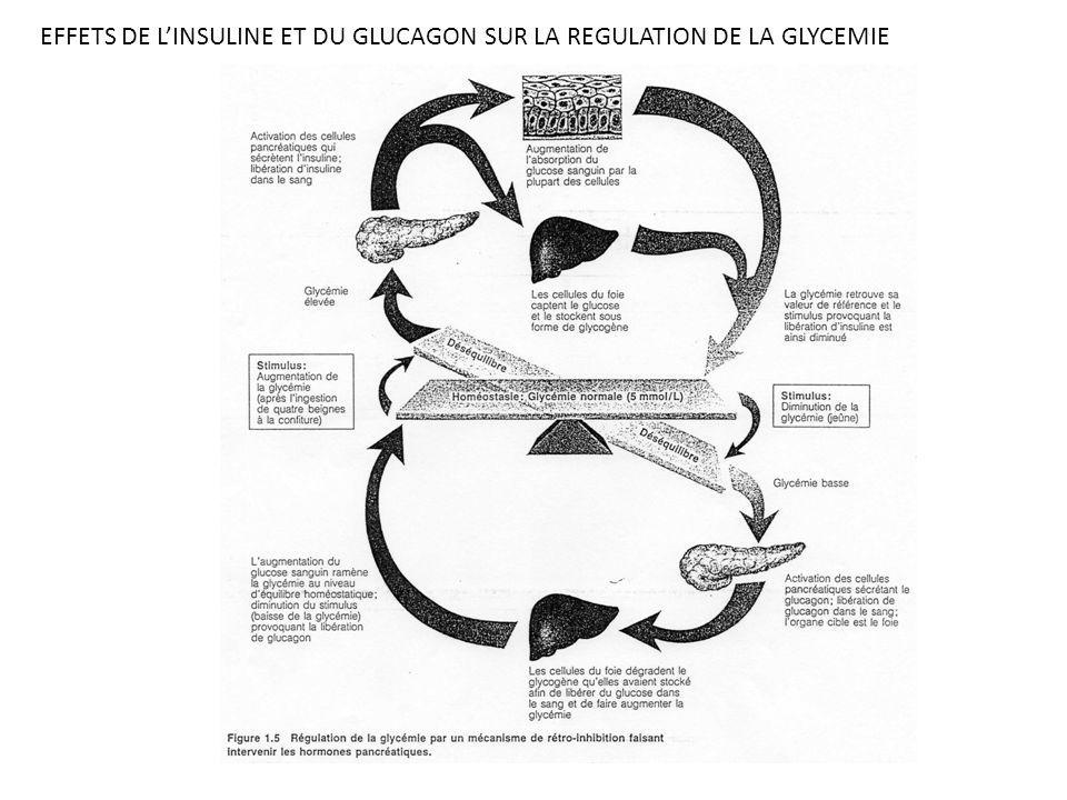 EFFETS DE LINSULINE ET DU GLUCAGON SUR LA REGULATION DE LA GLYCEMIE