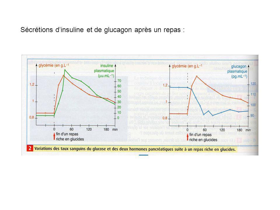 Sécrétions dinsuline et de glucagon après un repas :