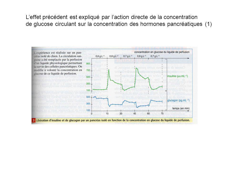 Leffet précédent est expliqué par laction directe de la concentration de glucose circulant sur la concentration des hormones pancréatiques (1)