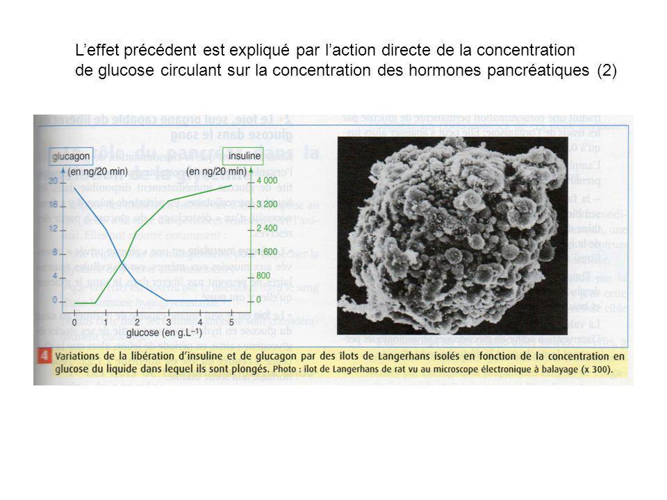 Leffet précédent est expliqué par laction directe de la concentration de glucose circulant sur la concentration des hormones pancréatiques (2)