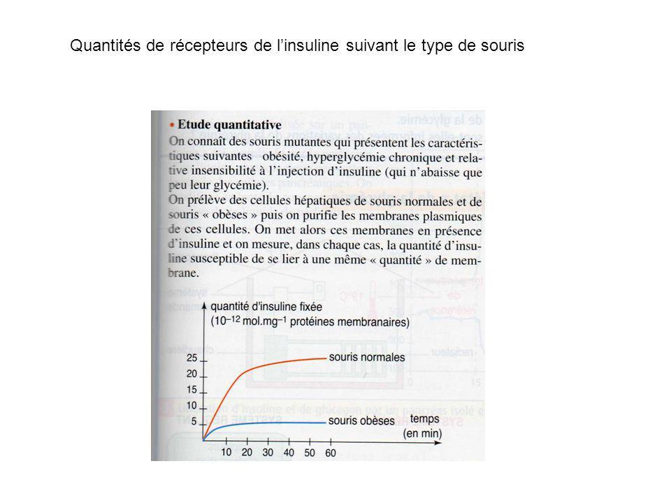 Quantités de récepteurs de linsuline suivant le type de souris