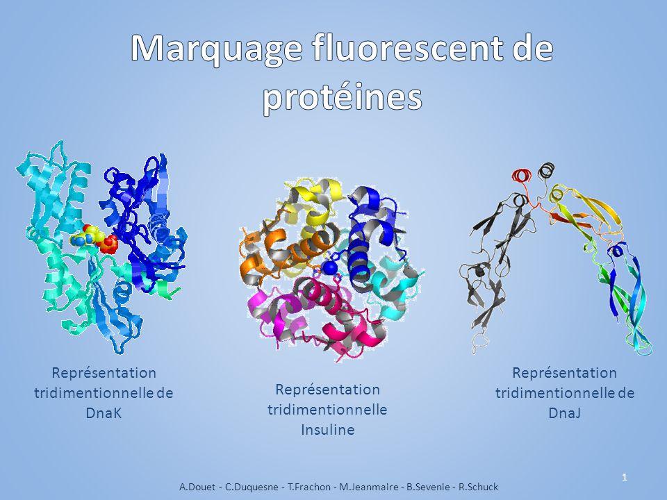 Représentation tridimentionnelle de DnaK Représentation tridimentionnelle de DnaJ 1 A.Douet - C.Duquesne - T.Frachon - M.Jeanmaire - B.Sevenie - R.Schuck Représentation tridimentionnelle Insuline