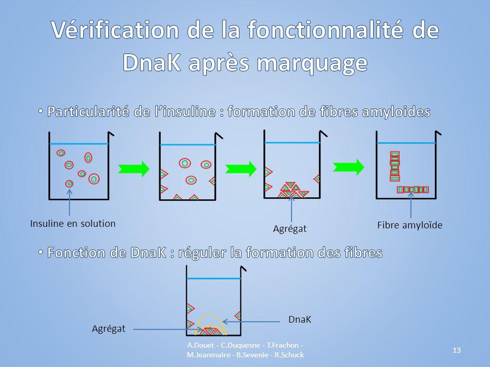 A.Douet - C.Duquesne - T.Frachon - M.Jeanmaire - B.Sevenie - R.Schuck 13 Agrégat DnaK Insuline en solution Agrégat Fibre amyloïde