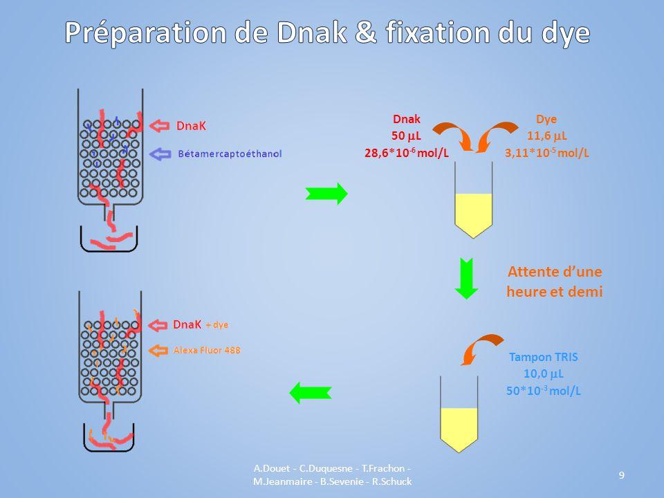 9 Dnak 50 L 28,6*10 -6 mol/L Dye 11,6 L 3,11*10 -5 mol/L Attente dune heure et demi Tampon TRIS 10,0 L 50*10 -3 mol/L