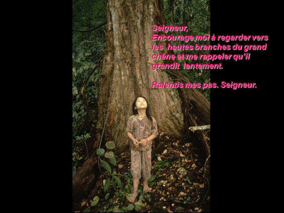 Seigneur, Encourage moi à regarder vers les hautes branches du grand chêne et me rappeler quil grandit lentement.