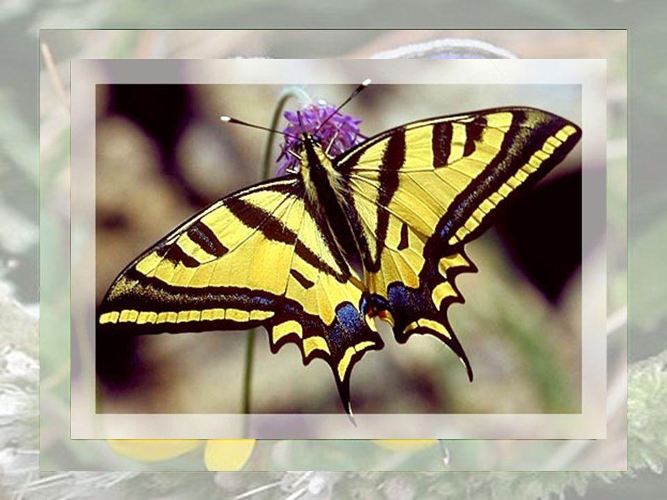 Nous si petits devrions en tirer les leçons, et saimer encore plus fort tels des papillons heureux dêtre ici bas, même pour une vie éphémère mais, Rem